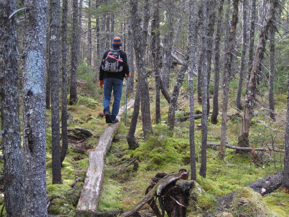 Wandelen met Ayurveda Wandelcoaching