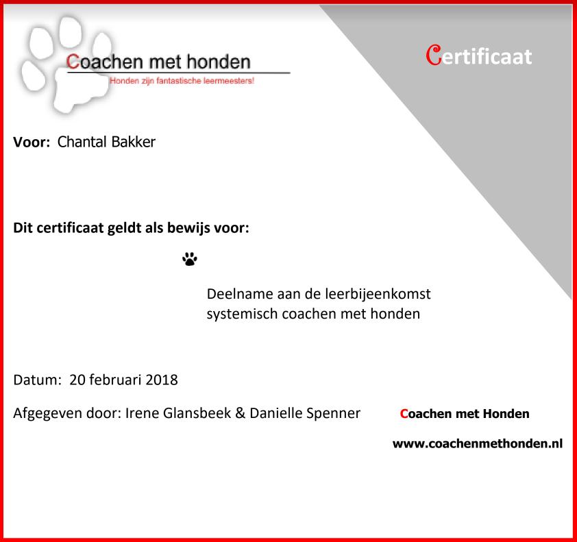Coaching met honden - Nijmegen