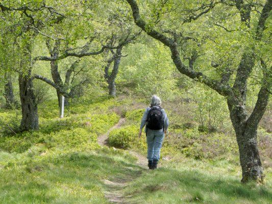 Wandelcoaching - In contact met de eigen natuur