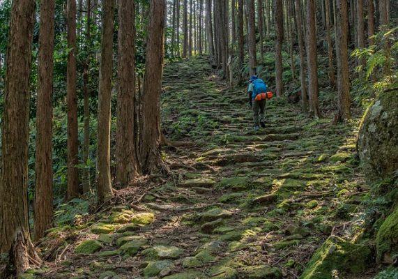 Shinrin Yoku -Cypress Forest